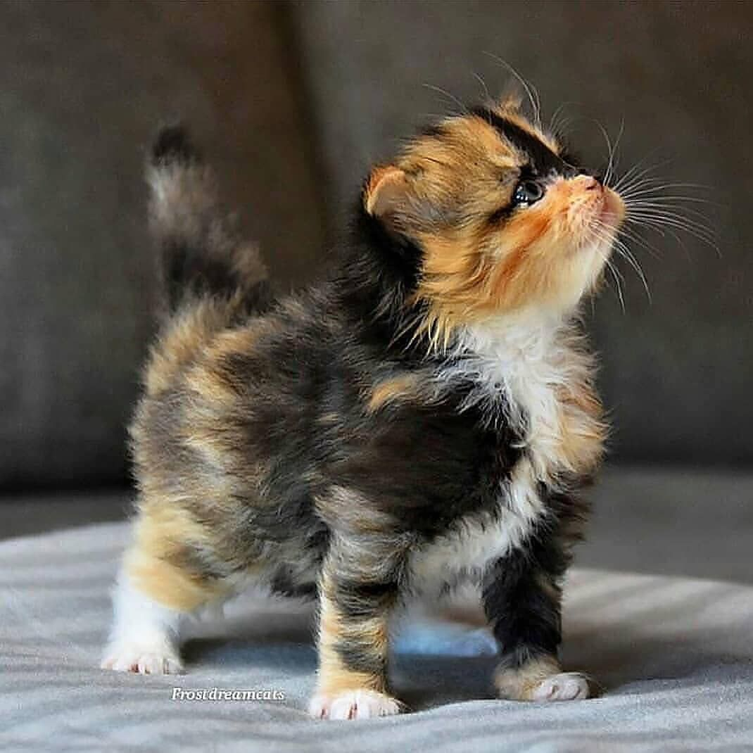 Cute Cats Of Instagram On Instagram Look At This Cutie Submit Your Cat S Photo To Our Contest Email To Kittens Cutest Cute Cats Cute Cats And Kittens