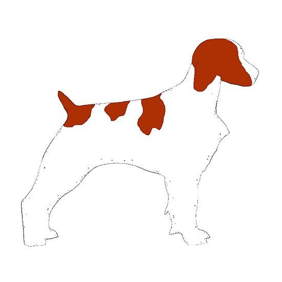 Pin On Brittany Spaniel