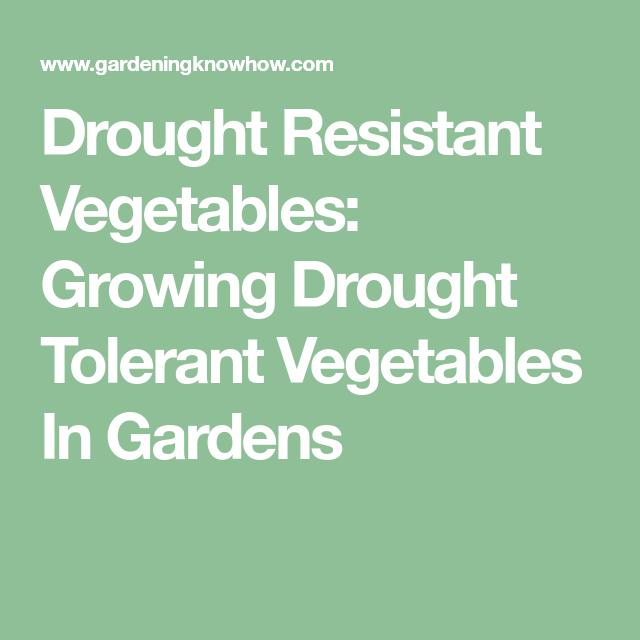 Drought Resistant Vegetables Growing Drought Tolerant 640 x 480