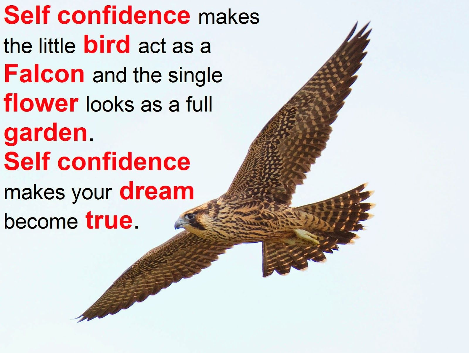 Self Confidence Quotes And Sayings Quotesgram Self Confidence Quotes Finding Love Quotes Confidence Quotes