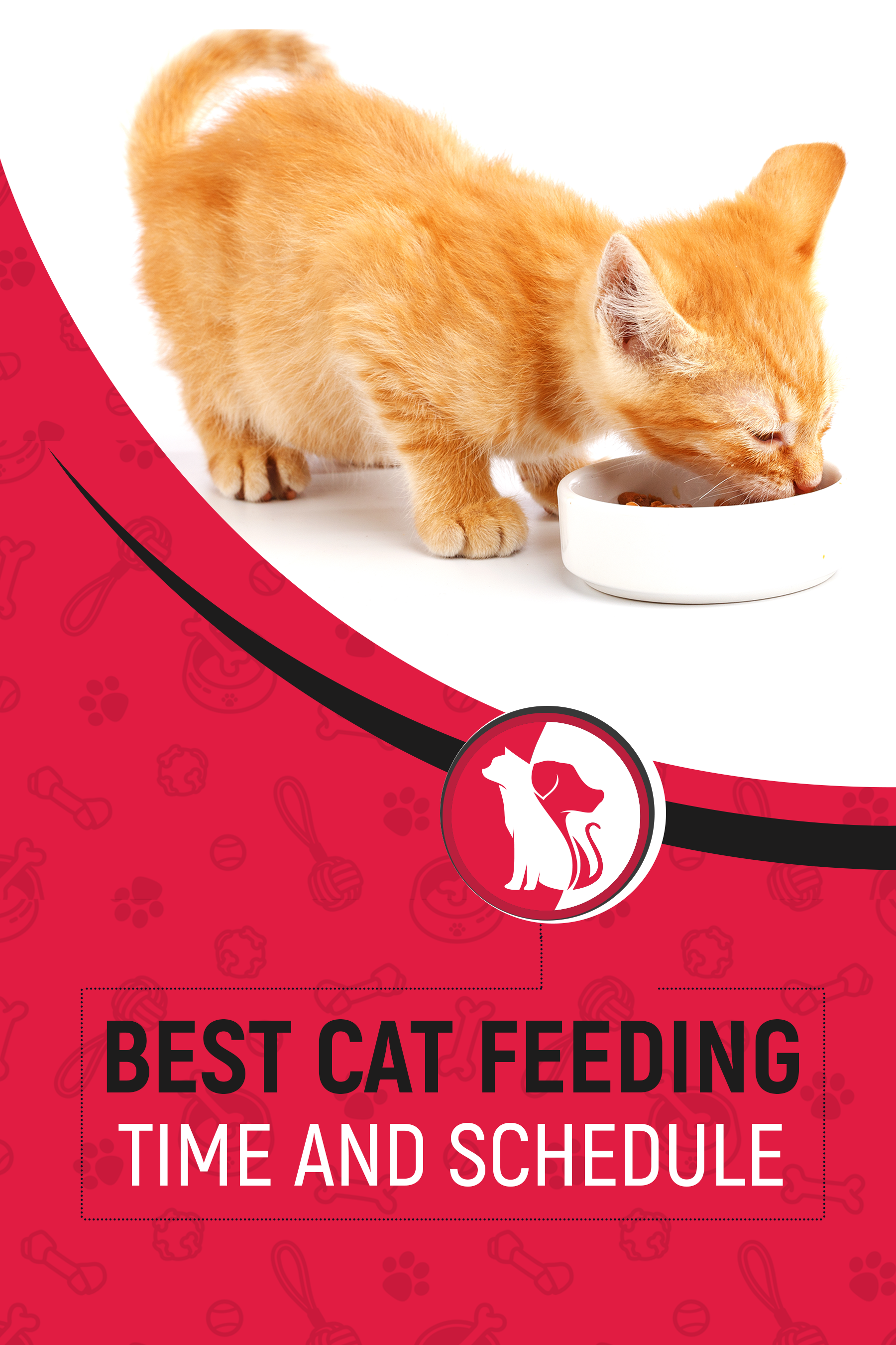 Best Cat Feeding Time And Schedule Cat Feeding Feeding Kittens Cat Feeding Schedule