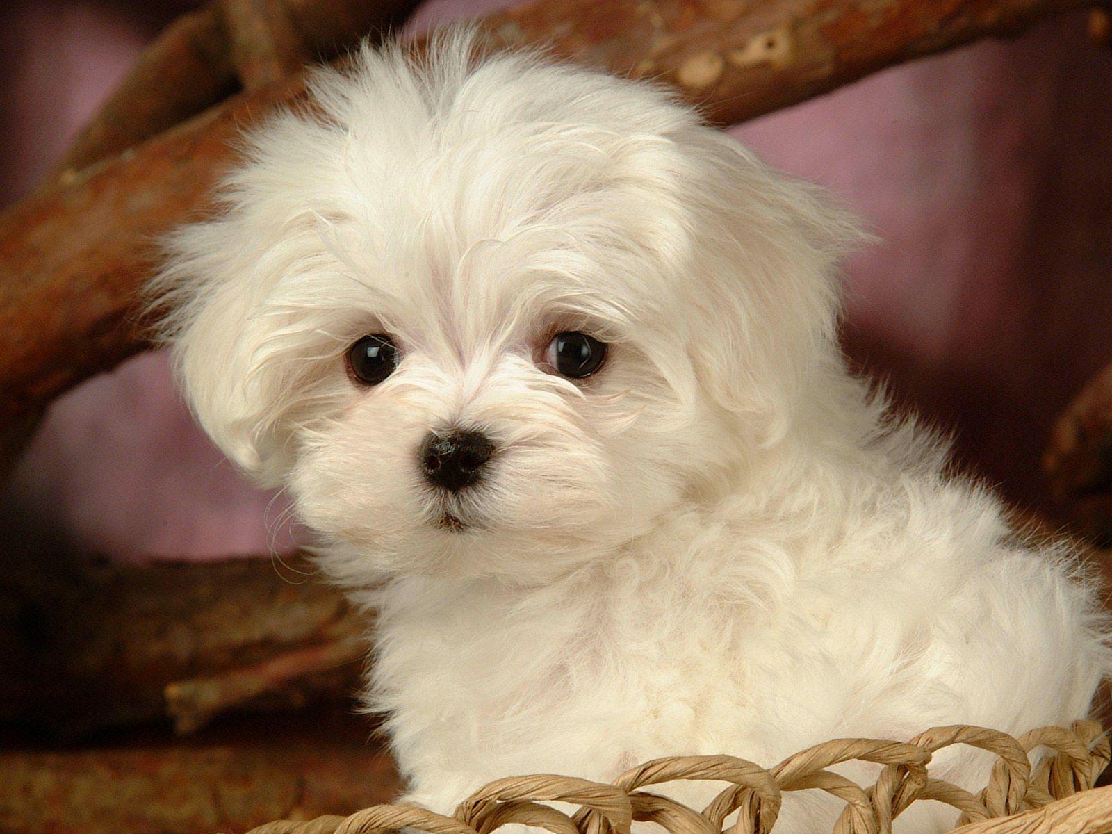 HI I M SITTING IN A BASKET I TS A DOG S LIFE