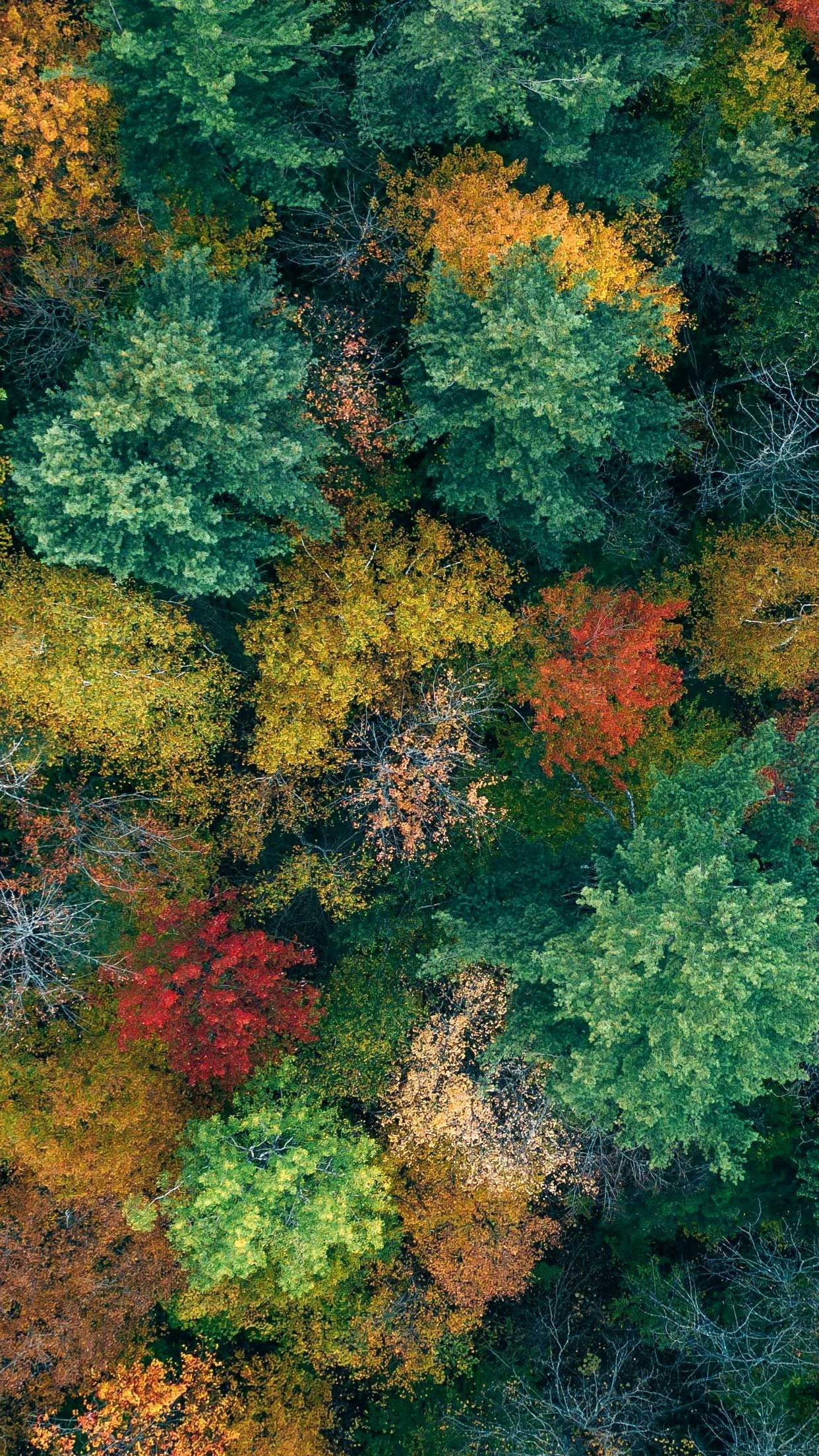 Trees Aerial View Autumn Iphone Wallpapers Hd In 2020 With Images