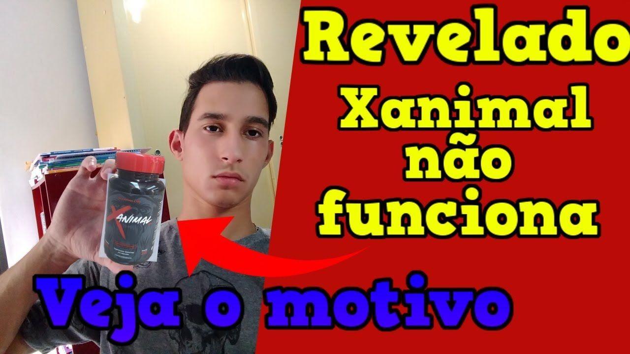 xanimal png