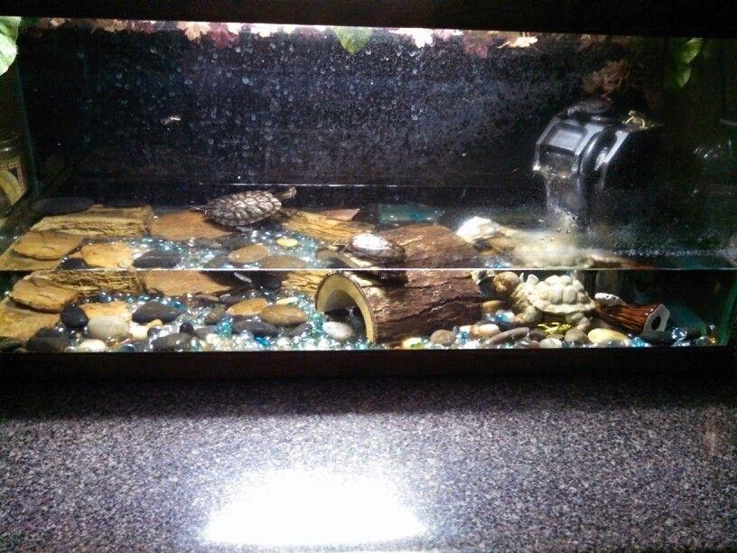 Idea for turtle tank setup Tank Ideas Pinterest
