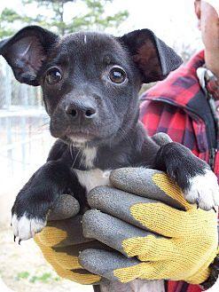 Danapittsburgh Pa Chihuahua Mix Meet Dana A Puppy For