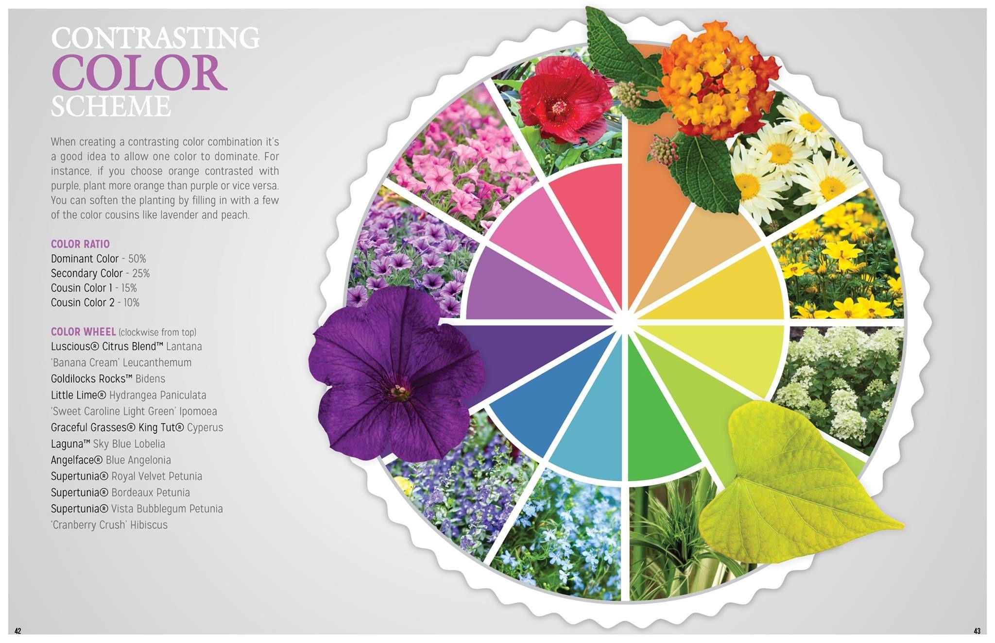 The Color Wheel In Plants Color Schemes Purple Plants