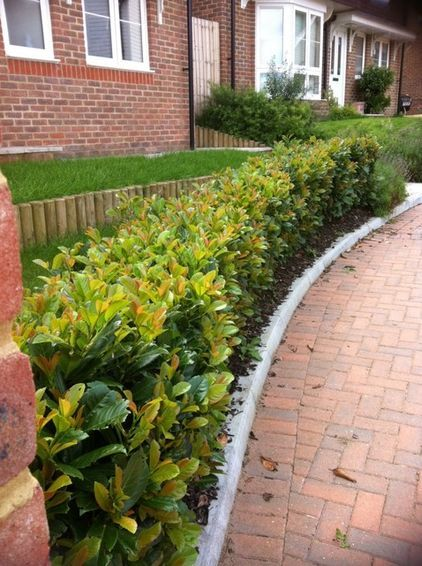 Stepover Hedging English Laurel Traditional Landscape Front Yard Landscaping Design Front Yard Landscaping