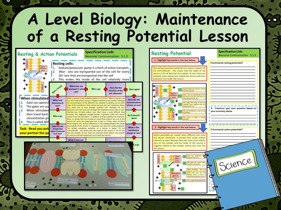 OCR A Level Biology Maintenance of a Resting Potential in ...