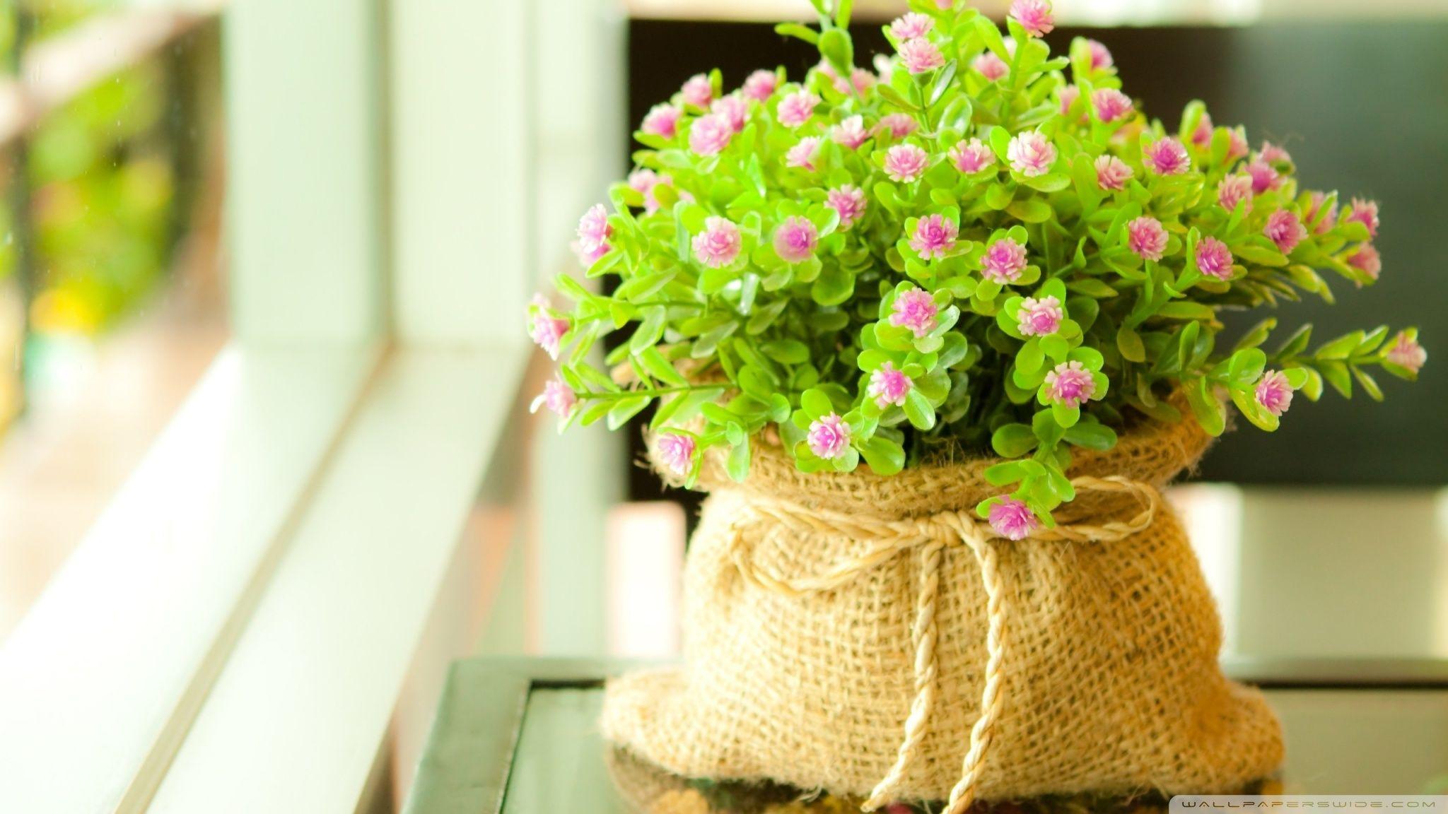 Cute Wallpapers For Desktop Background Full Screen Flower Wallpaper Good Morning Flowers Flower Pots