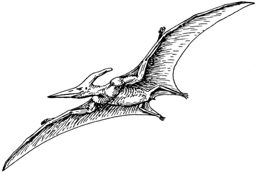 Interesting Facts About The Pterodactyl Pterodactyl Dinosaur Insect Tattoo
