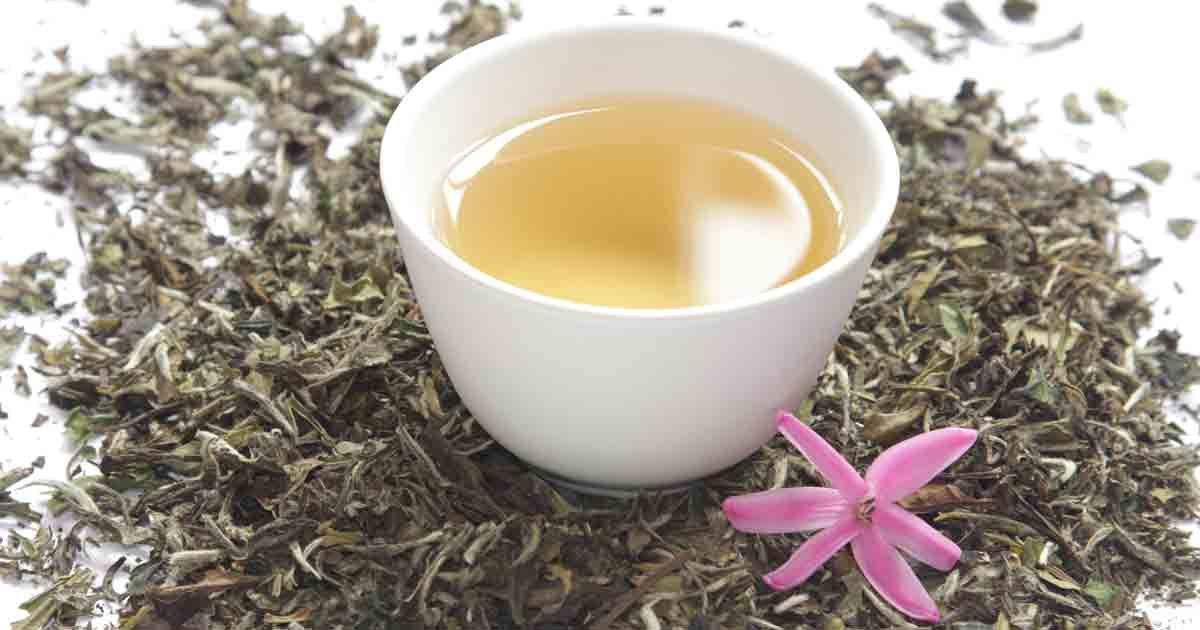 Image result for white tea