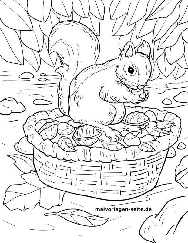 malvorlage eichhörnchen futtersuche herbst | ausmalbilder