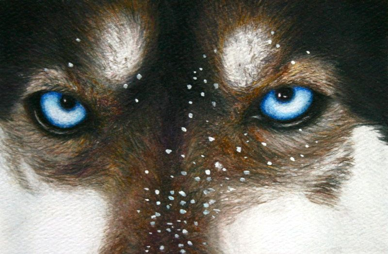 Look Into My Eyes - colored pencil by WolfScribe