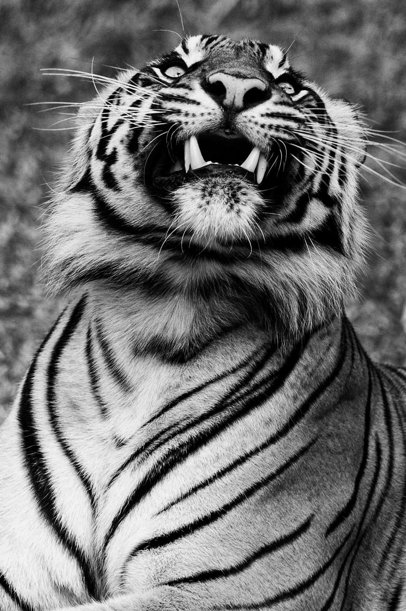 Sumatra Pride Endangered species activities, Endangered