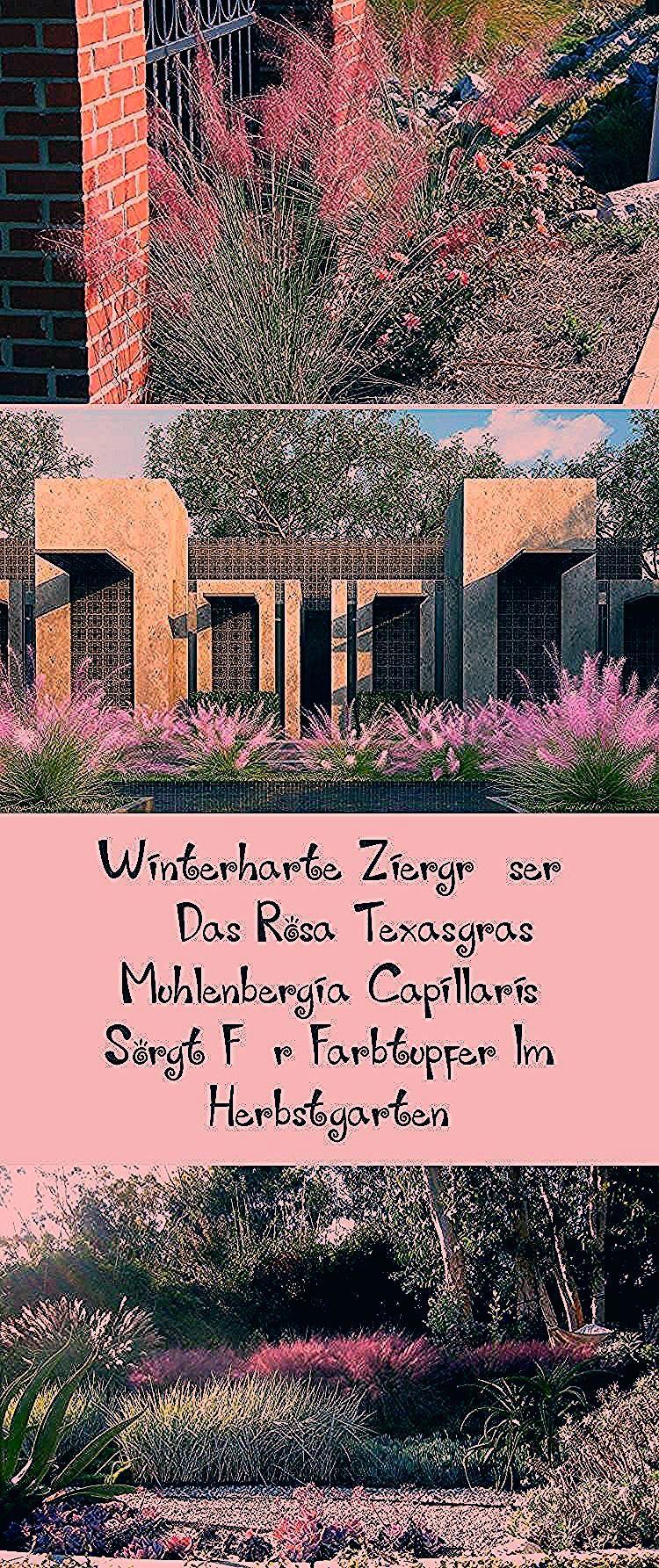 Photo of Gartengräser Winterhart – Früchte im Garten