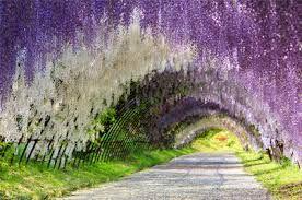 kawachi fuji gardens japan - Поиск в Google