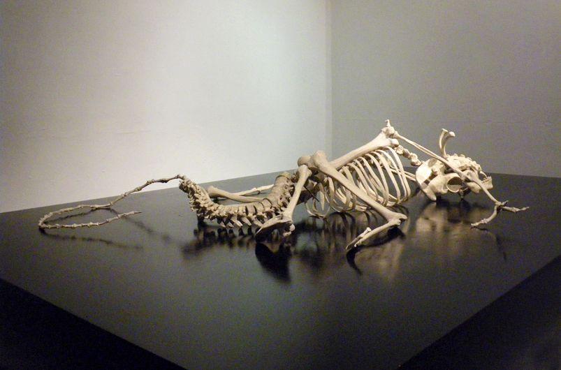 maarten vanden eynde, homo stupidus stupidus is a human skeleton, Skeleton