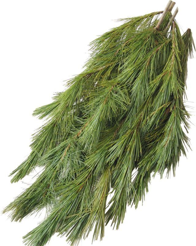 princess pine boughs