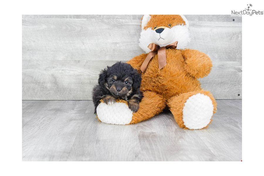 puppies for sale in columbus ohio under $500