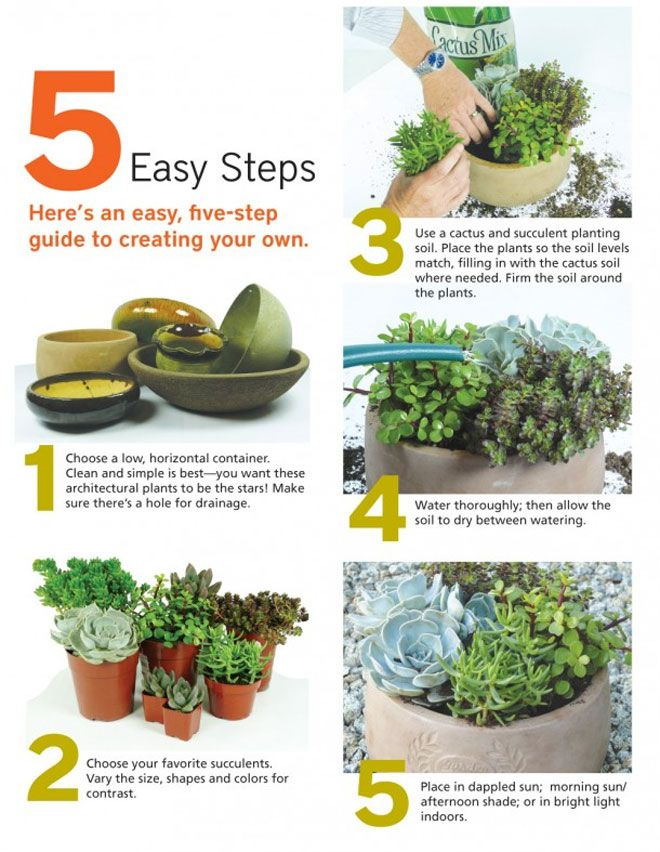 Follow These Five Steps To Create Your Succulent Container