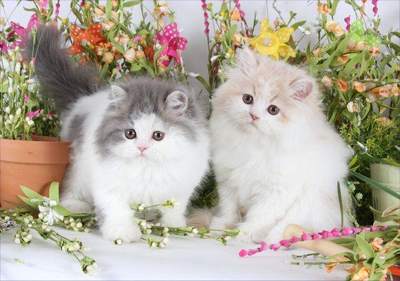 Those sweet kittens!