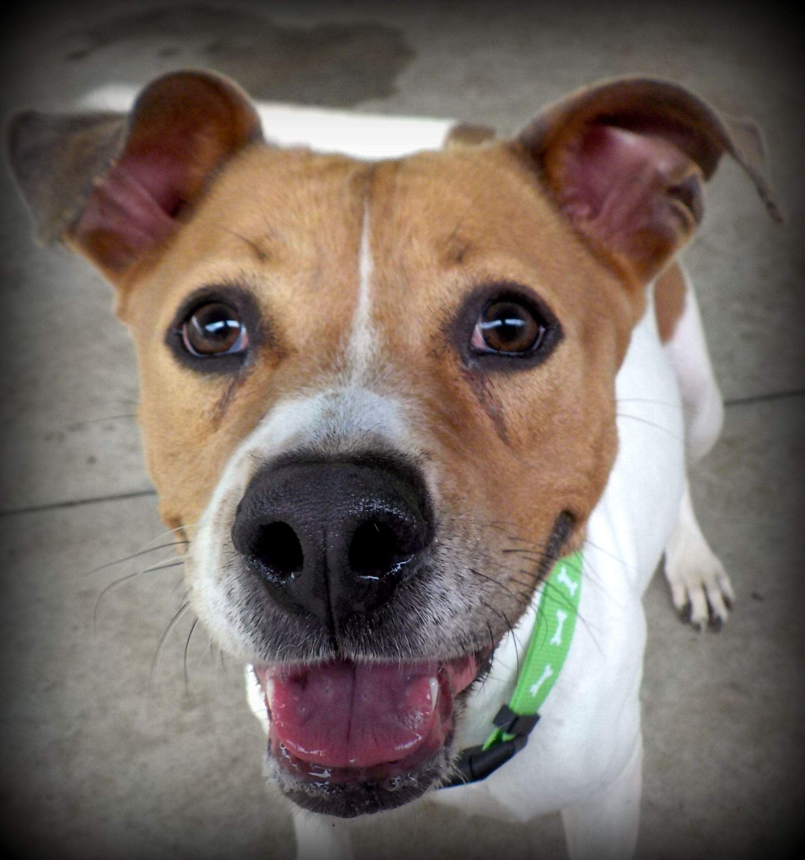 Adopt Uma A 11 Adopted Rescue On Dog Insurance Help Homeless
