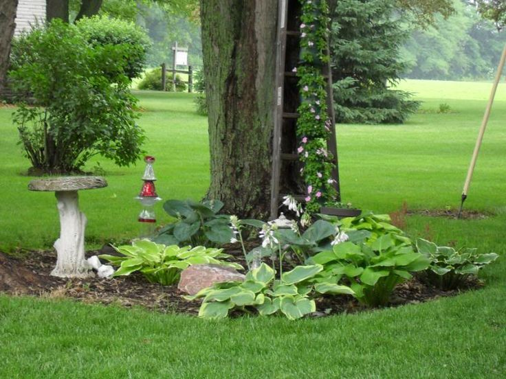 243 best images about Gardening & Outdoor Life on