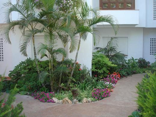 Resultado de imagen para jardines modernos con palmas for Palmeras de exterior