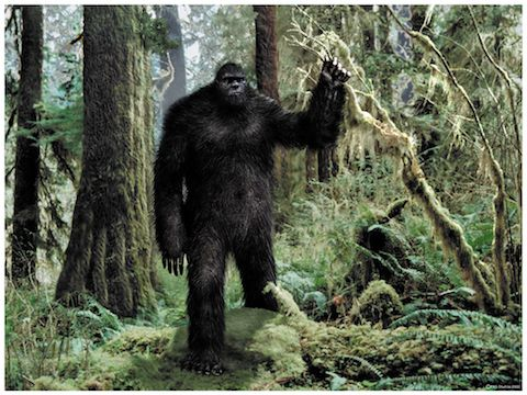 Sasquatch Watching & Running from Survivorman Les Stroud In Texas: Bigfoot, or Sasquatch, is described as a large, hairy, muscular, bipedal ape-like creature, roughly 6 – 9 feet tall, covered in black, dark brown, dark reddish, white or grey hair. Individuals claiming...