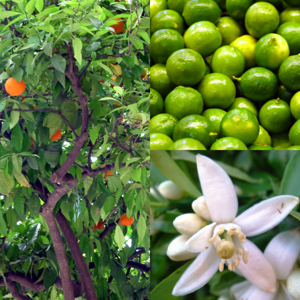 7 Edible Plants To Grow Indoors With Images Edible 400 x 300