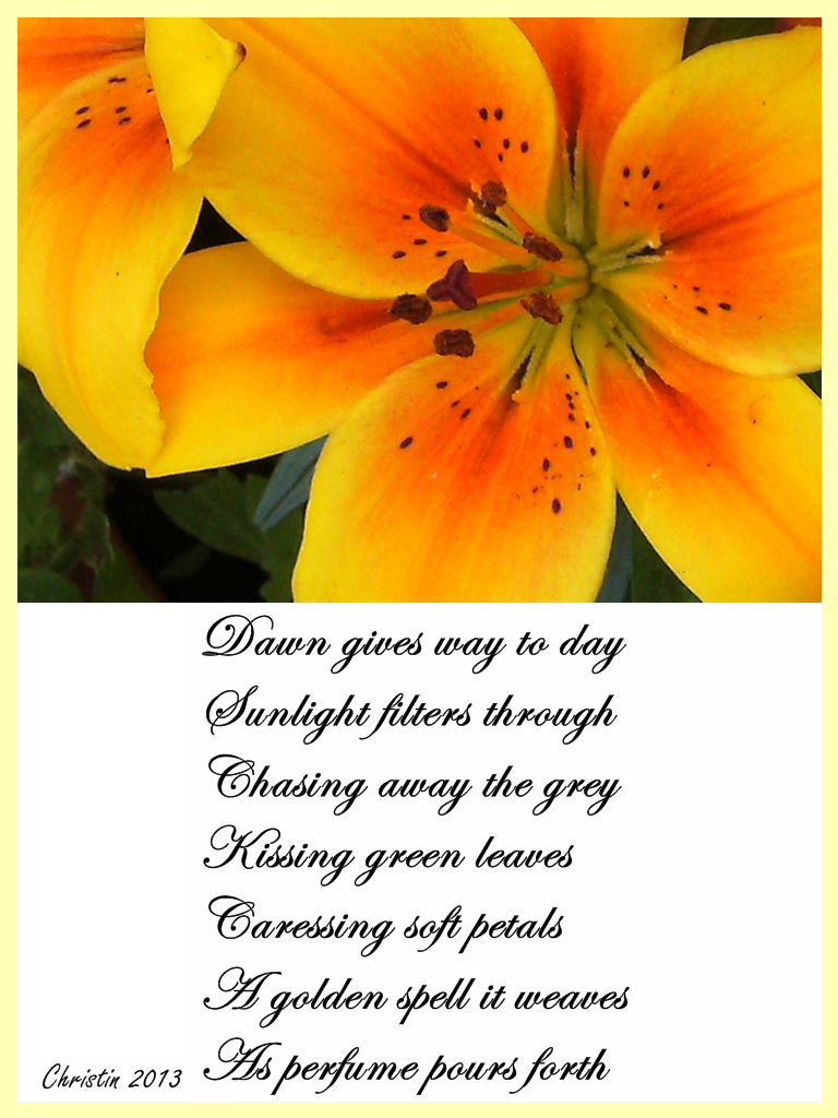 Christins Poems About Love And Life Sunlit Flower Flowers Poetry