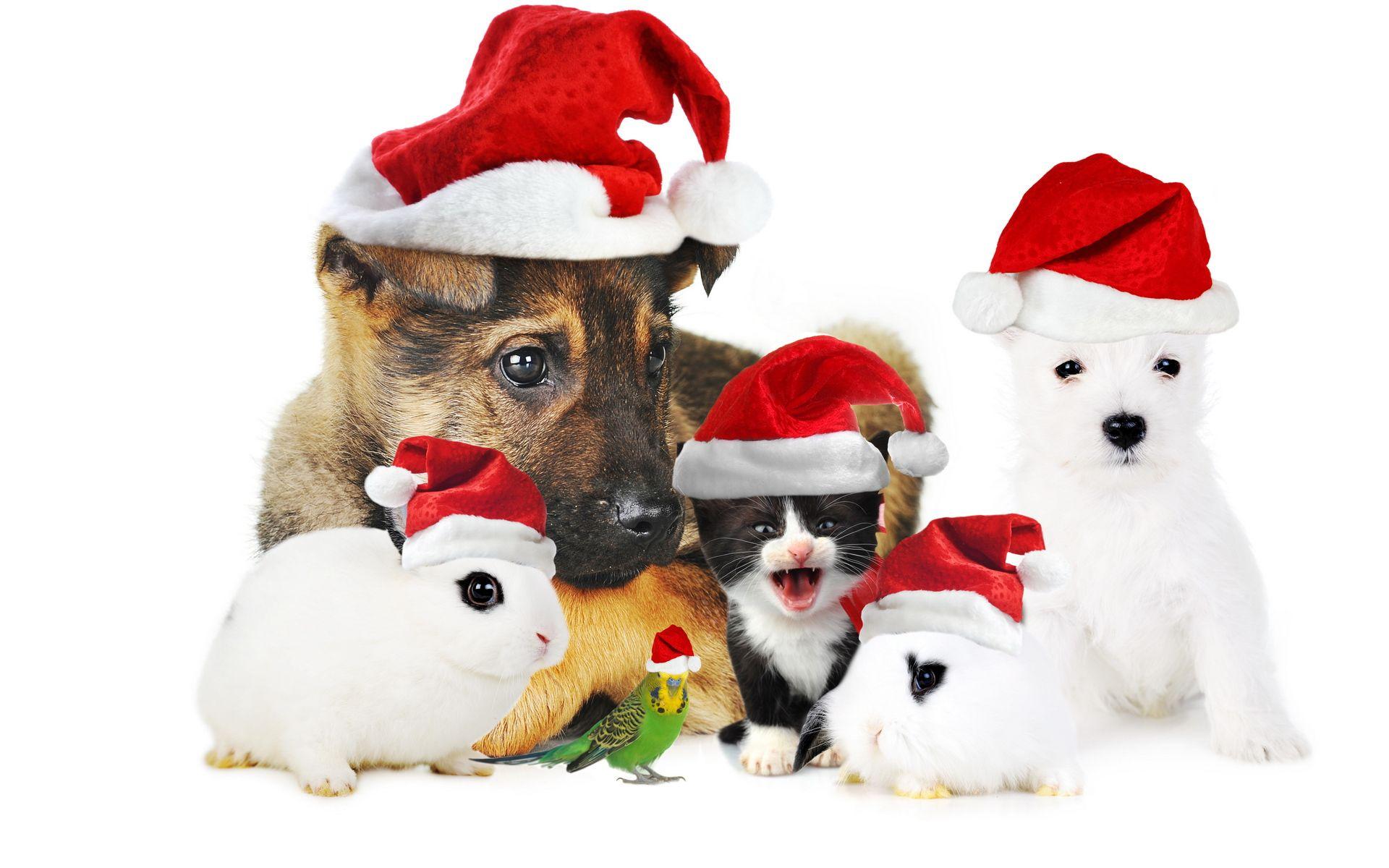 Christmas Computer Wallpaper Desktop Background 1920x1200 Id 323375 Pet Christmas Pictures Christmas Dog Christmas Animals