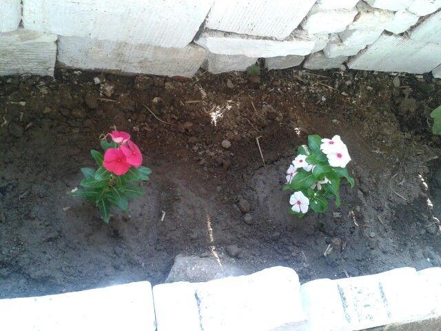 My Flowers. Aydın/ Türkiye
