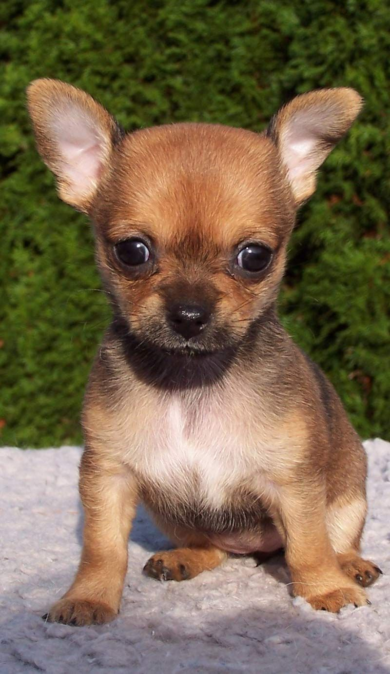 Dog Sizes Small Medium Or Large How To Choose Cute Animals