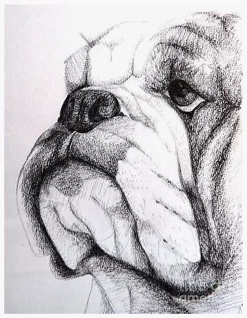 Pin By Amy Mazac On How To Draw Pinterest Bulldogge Hunde And