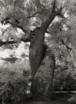 The Lovers by Beth Moon