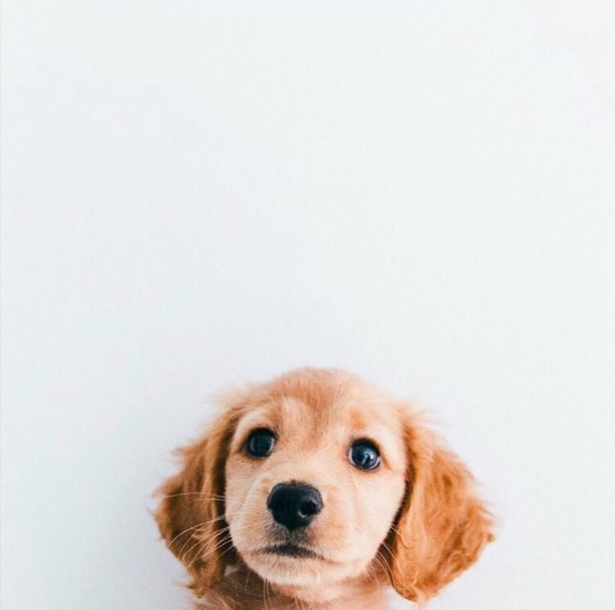 I N N O C E N C E Cute Animals Puppies Cute Dogs