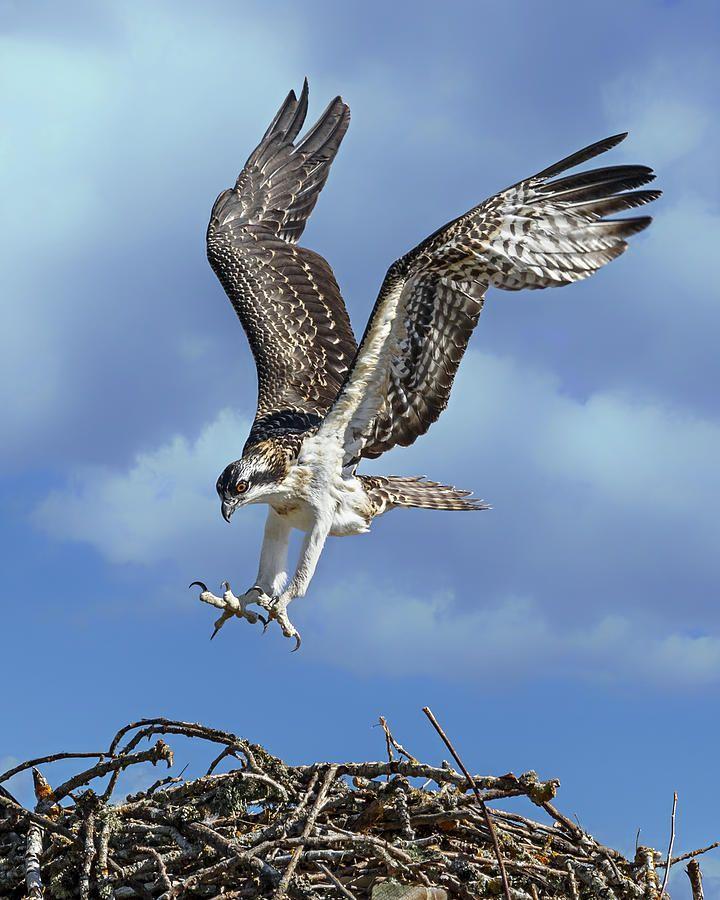 93b0e9b2c5ab56e25fda953700d5efa2 - How To Get A Hawk Out Of A Building