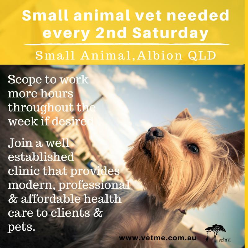 Locum Cas Veterinarians Small Animal Albion Qld Small Pets