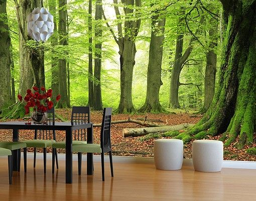 photo wall mural mighty beech trees tapeten tapeten selbstklebende tapete und fototapete. Black Bedroom Furniture Sets. Home Design Ideas