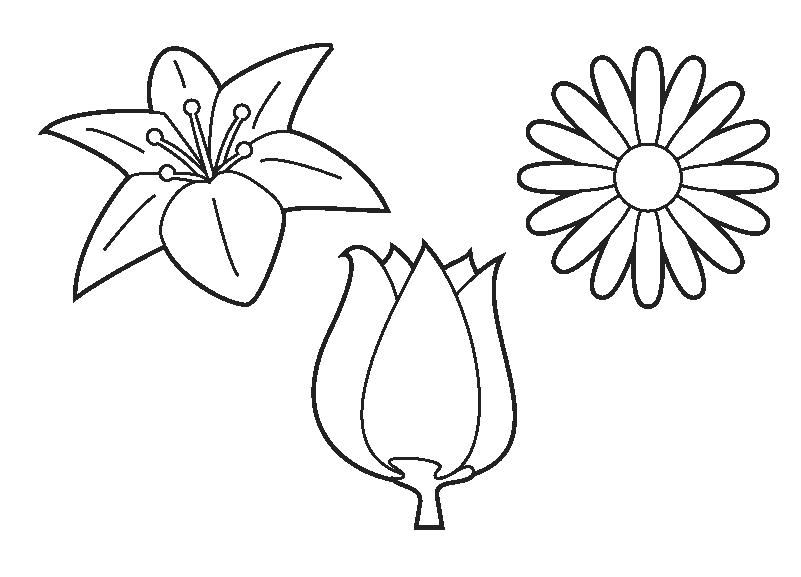 Kleurplaat bloemen : Bloemen : Pinterest