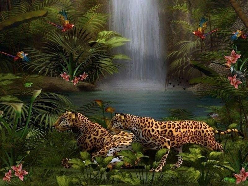 тигр и леопард в лесу картинки охраняемый заповедник, котором