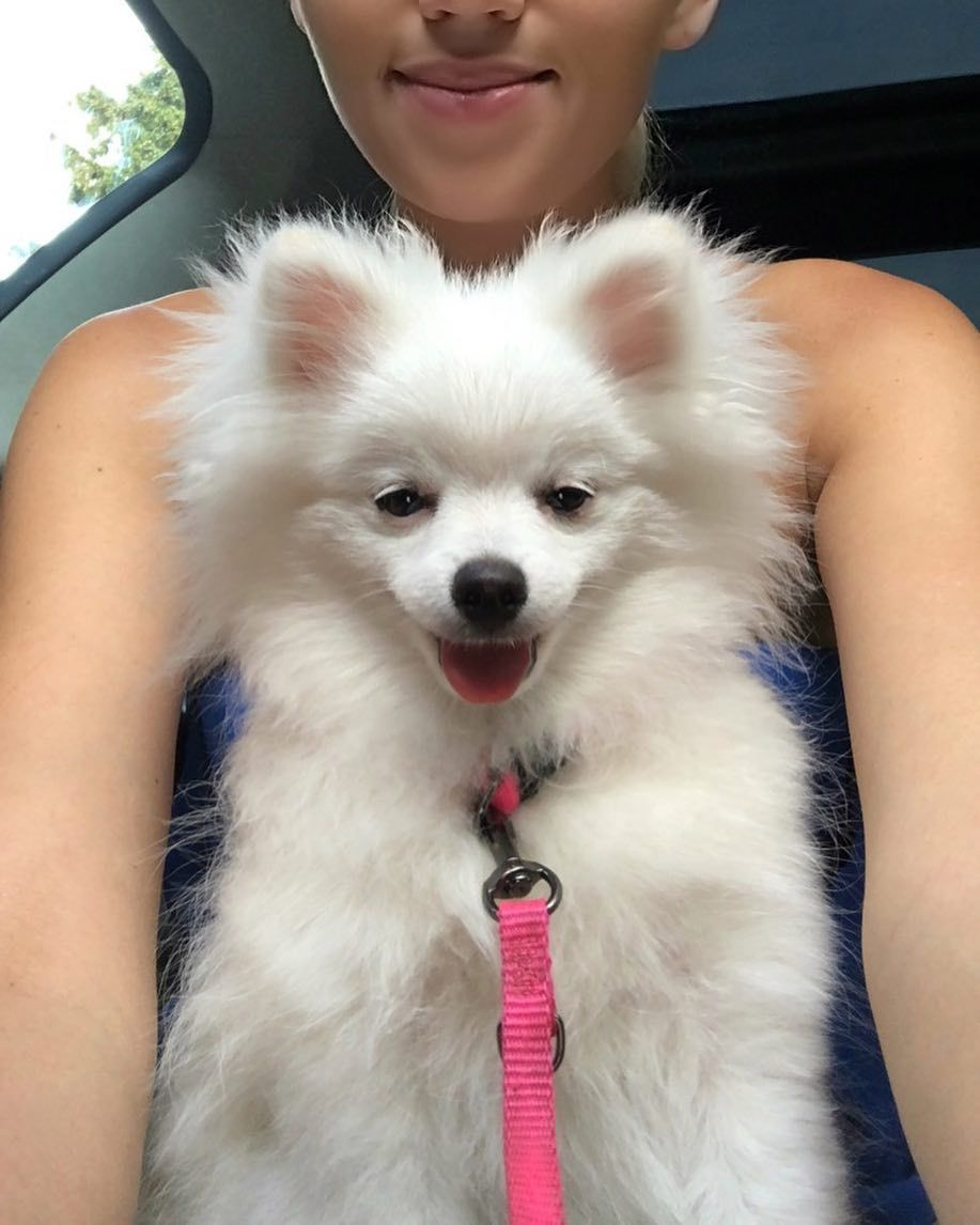 When I Am Driving With Mommy Pomeranian Pinterest Pomeranian