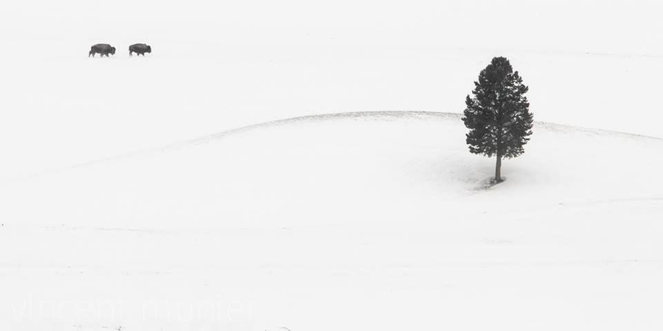 Vincent Munier photo