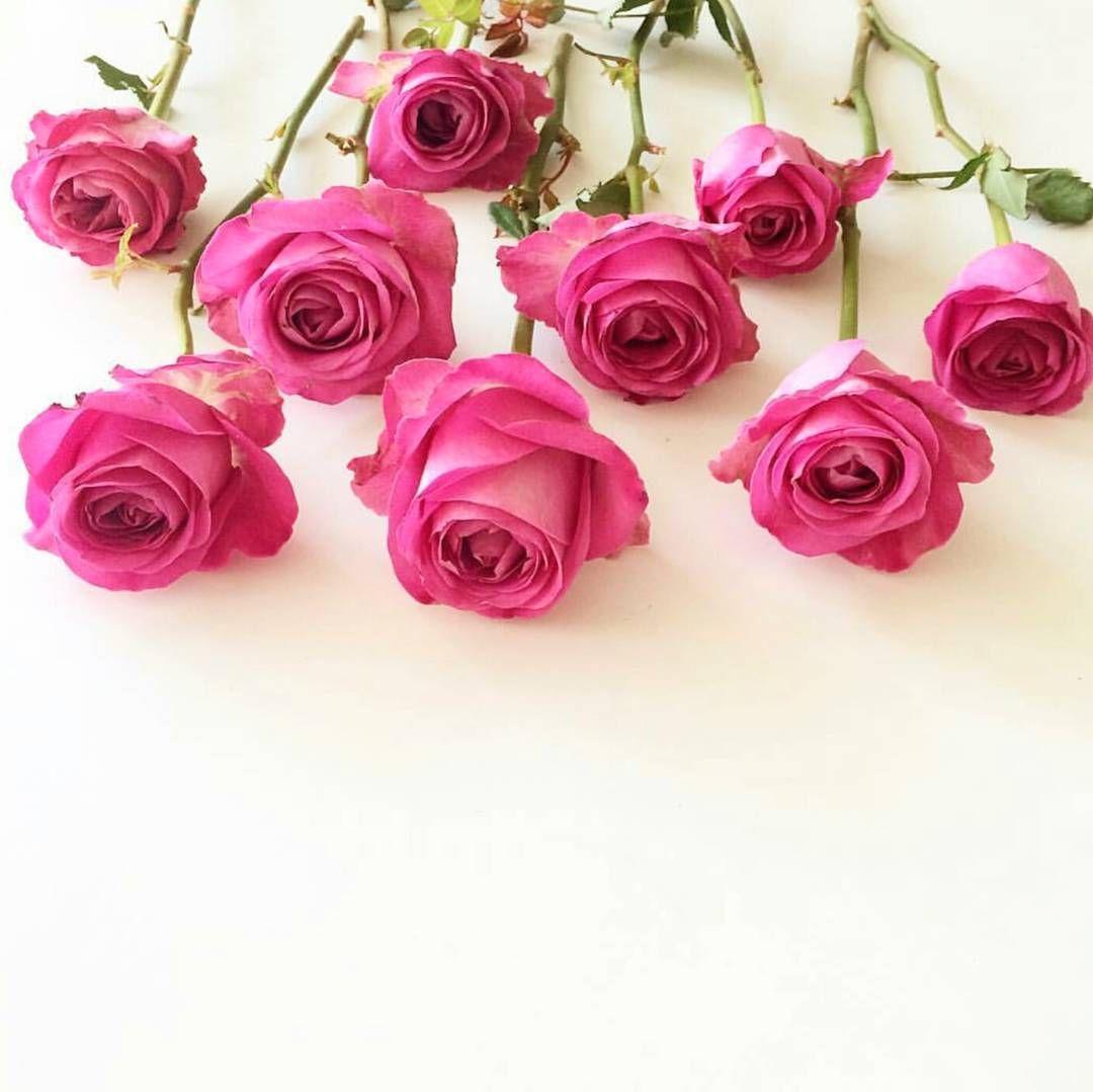صل على الحبيب المصطفى عليه افضل الصلاة والسلام اذكر الله يذكرك حسابي للتصميم Noor 7yati Flower Background Iphone Book Flowers Flower Backgrounds