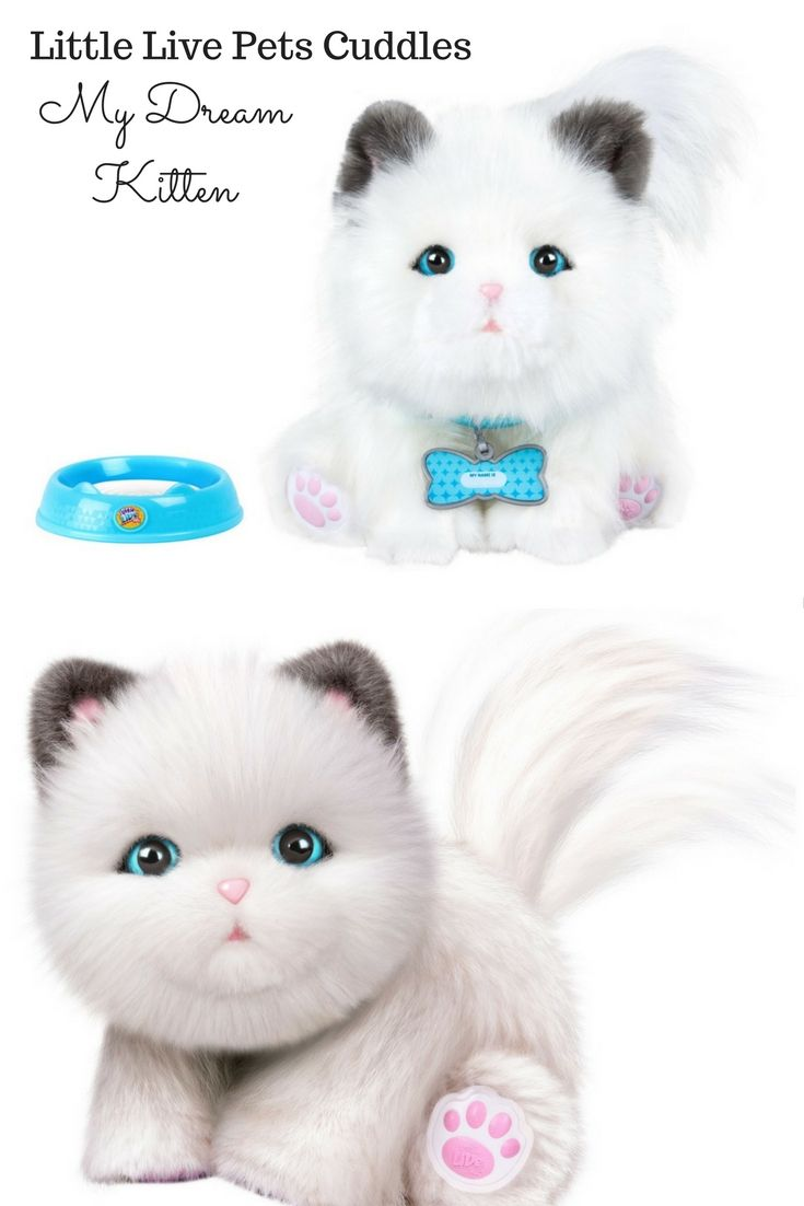 I Love This Little Toy Kitty She S So Adorable Little Live Pets