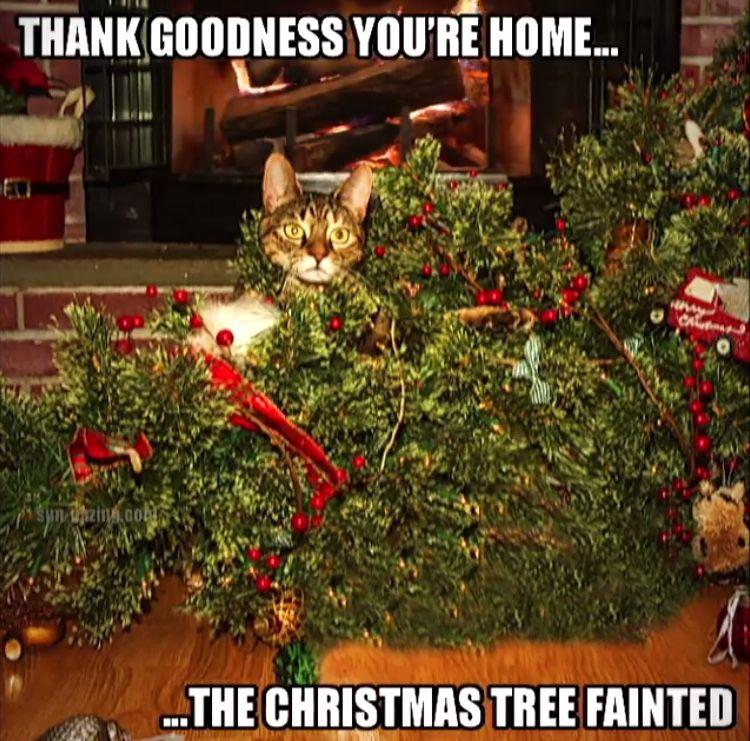 The Christmas Tree fainted! Christmas tree, Christmas