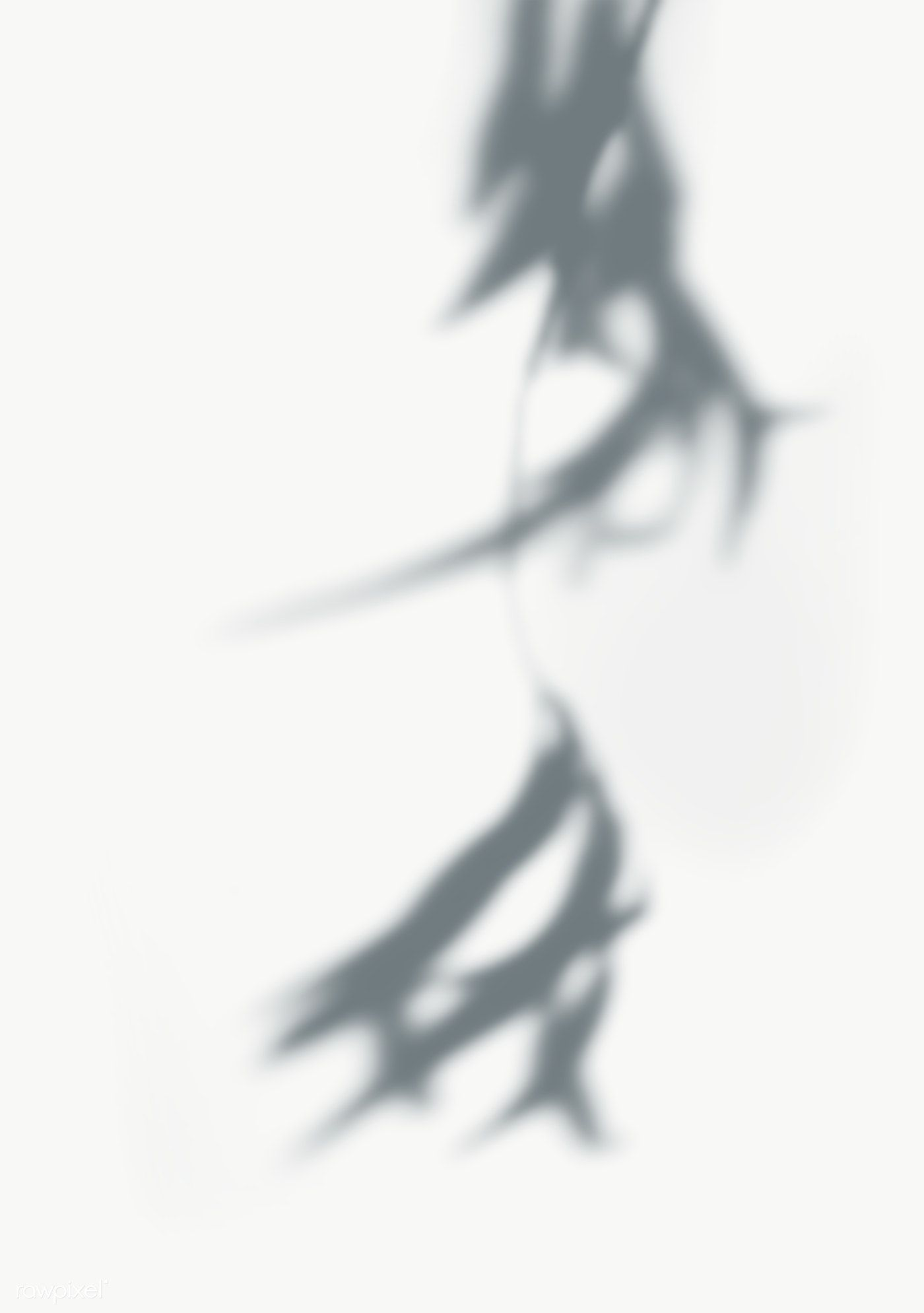 Shadow Of Leaves On A Wall Free Image By Rawpixel Com Shadow Shadow Photography Silhouette Photography