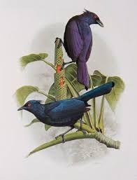 Resultado de imagem para bill cooper birds of paradise paintings